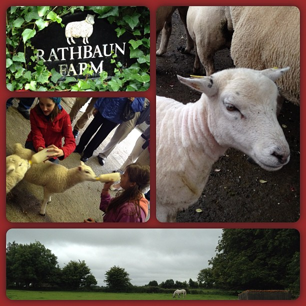 In Ireland. That's my niece feeding the lamb.