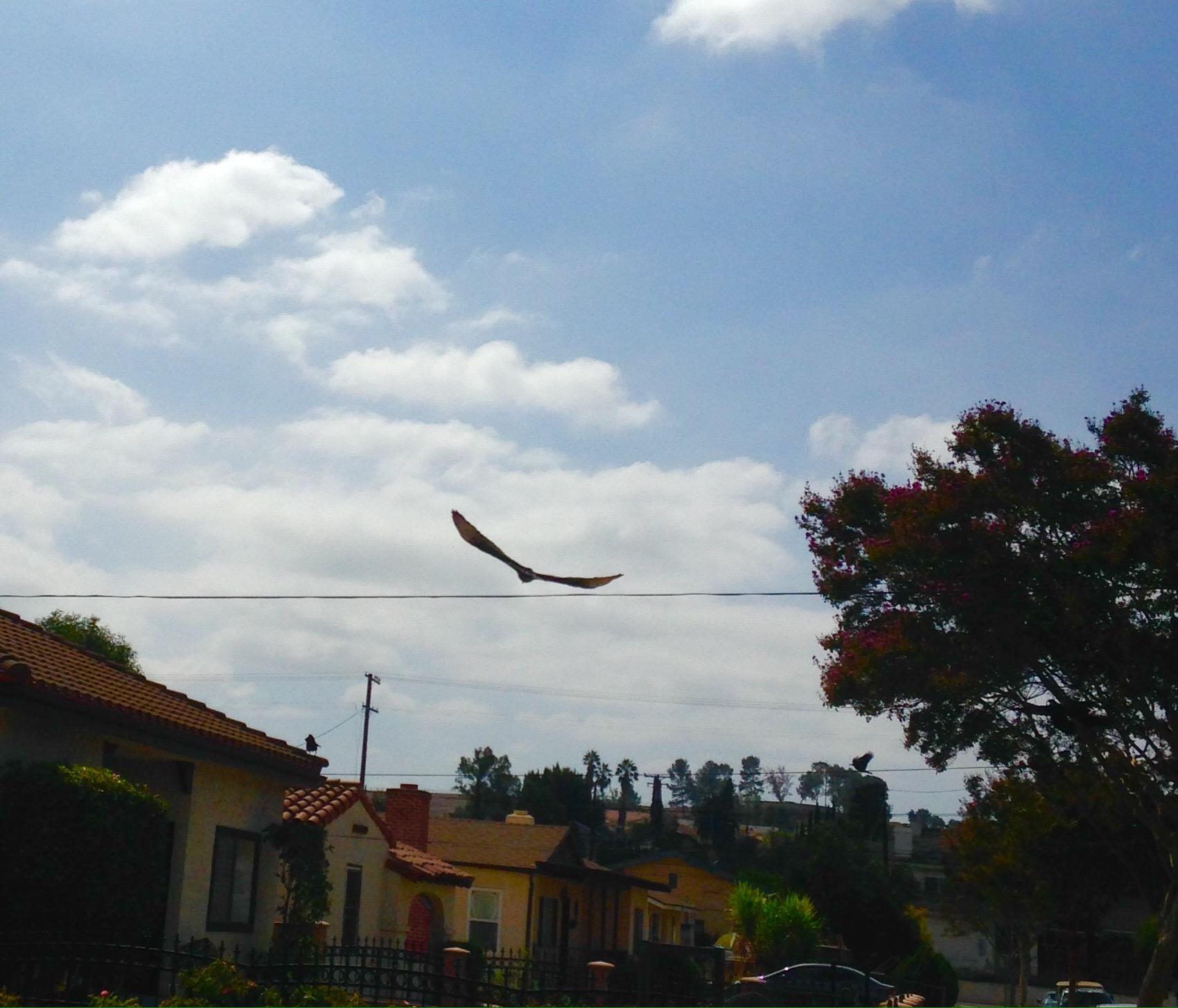 Suburban Vulture